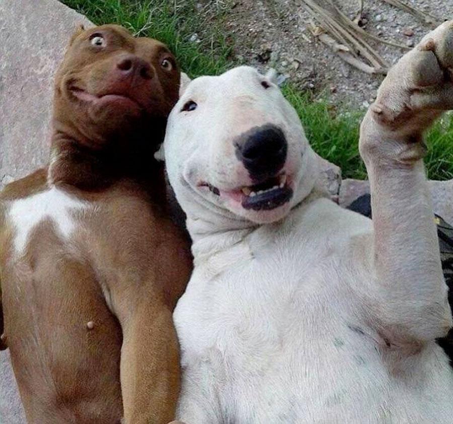 meme selfie de perros